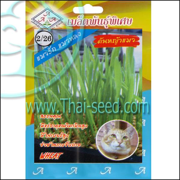 ต้นหญ้าแมว
