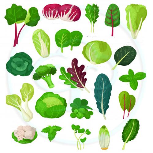 กลุ่มเมล็ดพันธุ์-กินใบ/กินต้น
